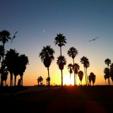 venice-beach-sign-sunset